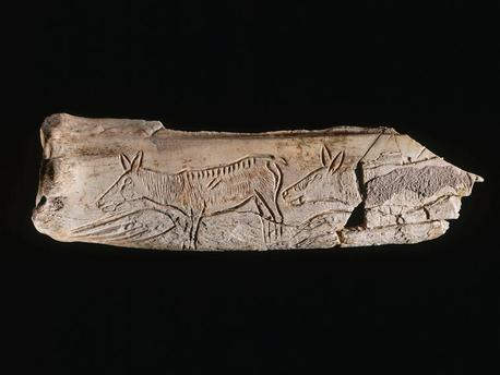 Os gravé figurant des biches et deux signes ovulaires - Vers 15 000 avant J. C.