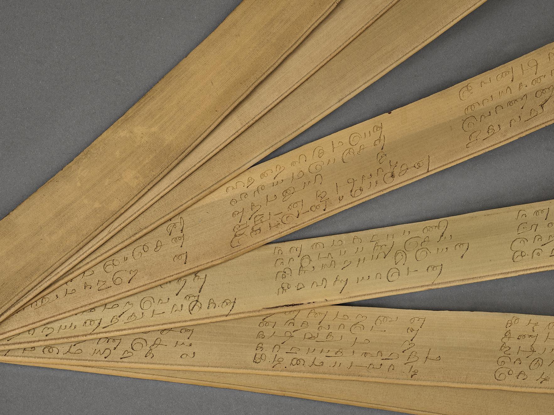 Manuscrit tamoul composé de feuilles de palme formant des ôles avec inscriptions en tamoul - Ouvert en éventail